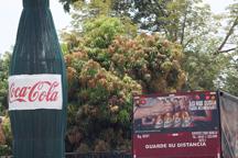 Un camión sale de la planta de Coca - Cola en Nejapa.