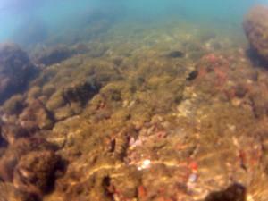 La playa Los Cóbanos, Sonsonate, donde la mayoría de el coral que vive en sus arrecifes están muriendo debido a que sus aguas han incrementado su temperatura debido al cambio climático. Foto Diario Co Latino/ Guillermo Martínez.